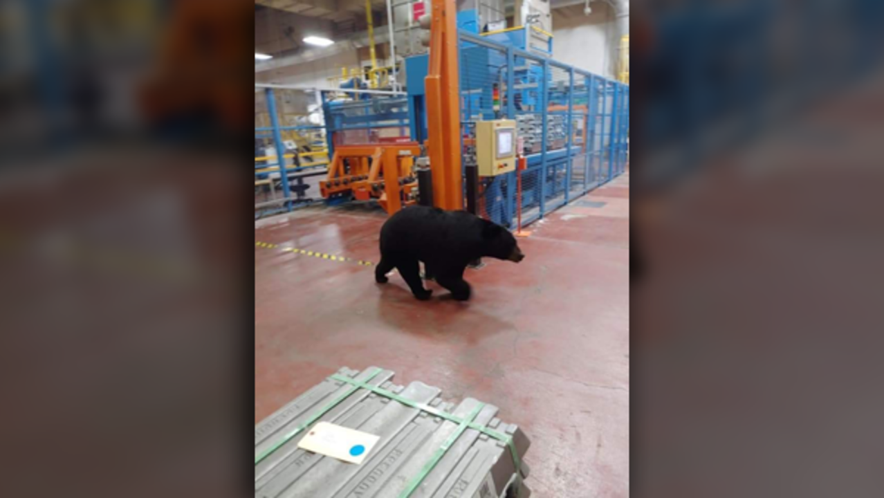 Surprise guest at a manufacturing plant!
